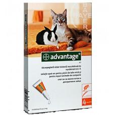 Advantage (Адвантейж) 40 капли (1 пипетка)